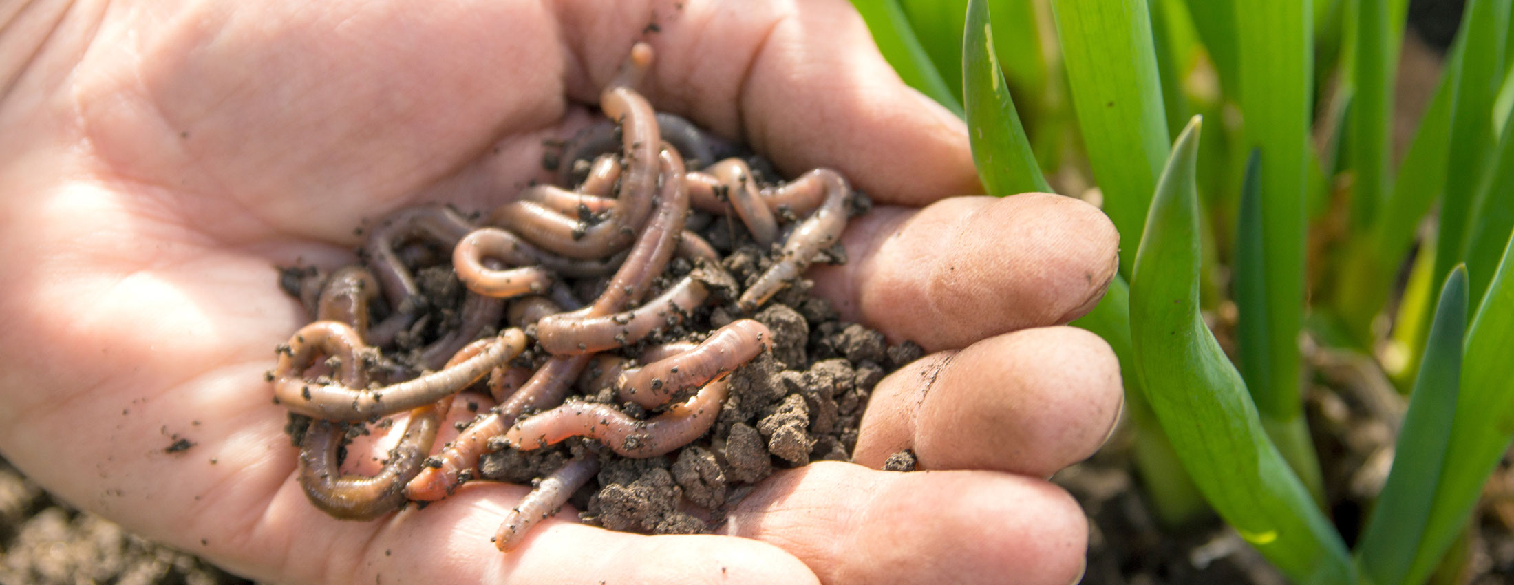 Bringing Back The Earthworms – Paul's Story