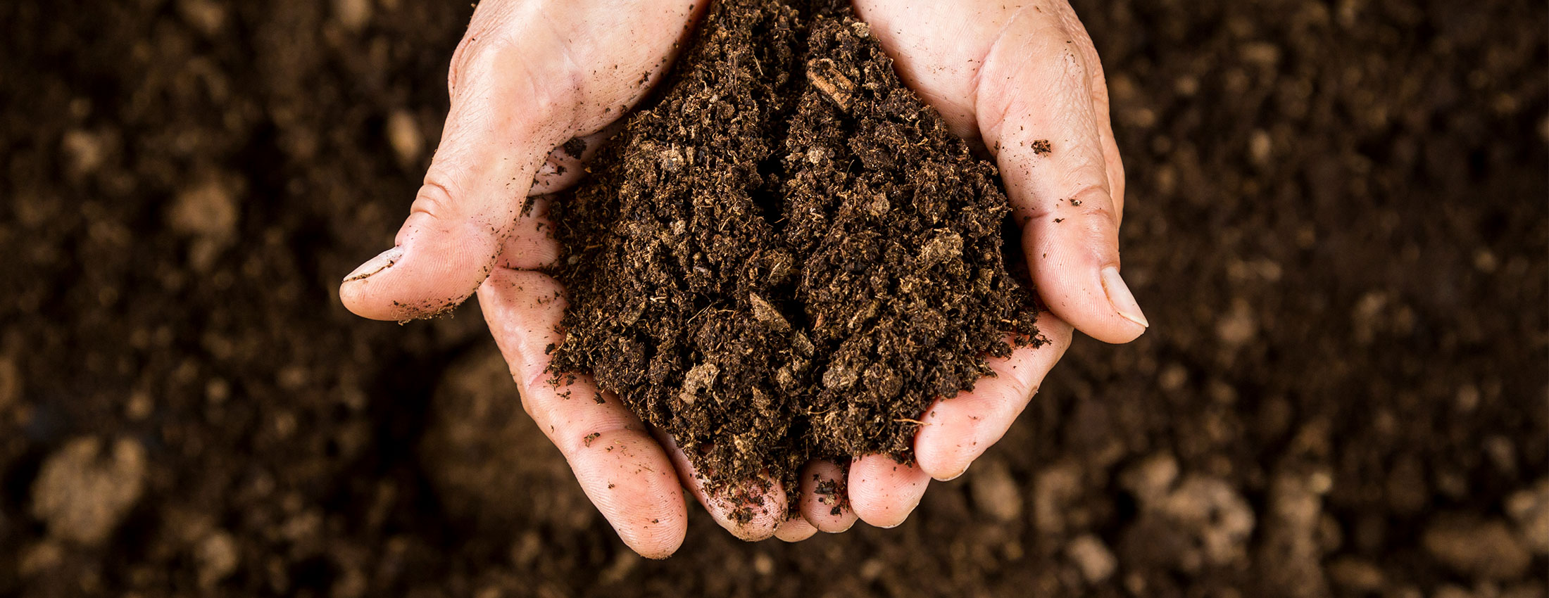 Creating Disease Suppressive Soils – Part 2