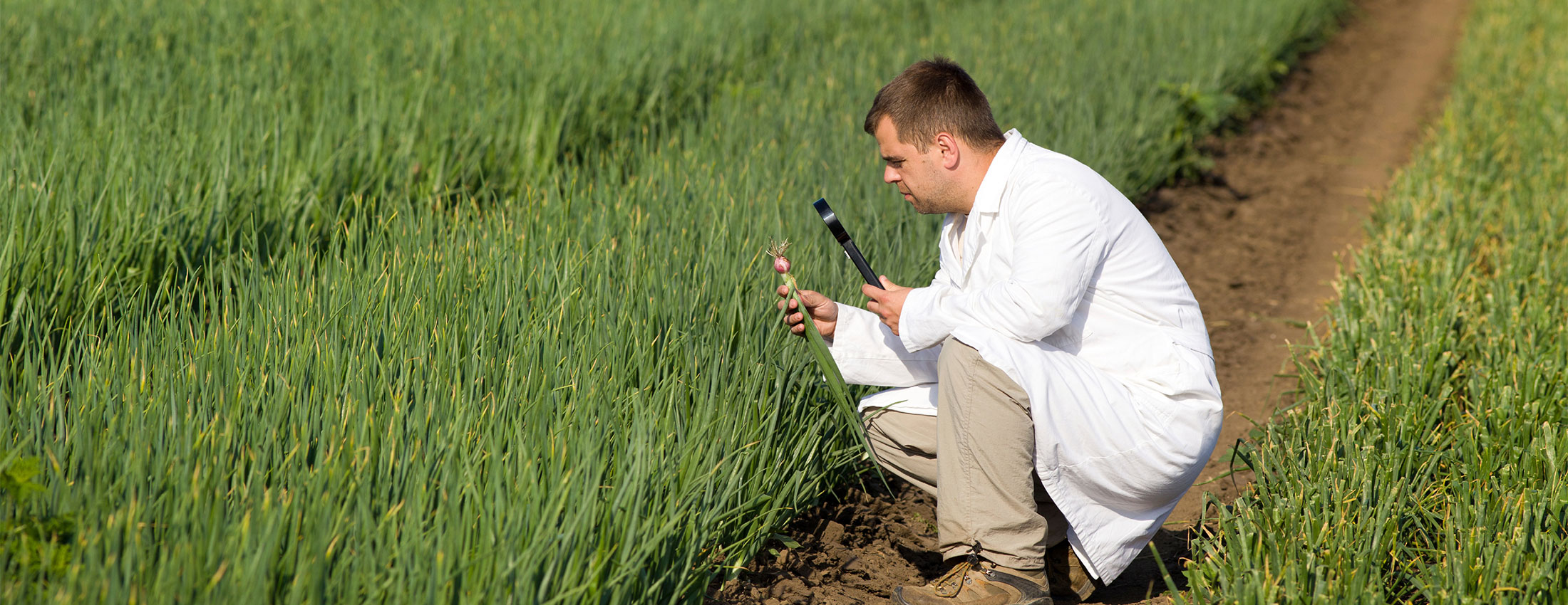 Super Cool Tools – Less Guesswork when Monitoring Plant and Soil Health