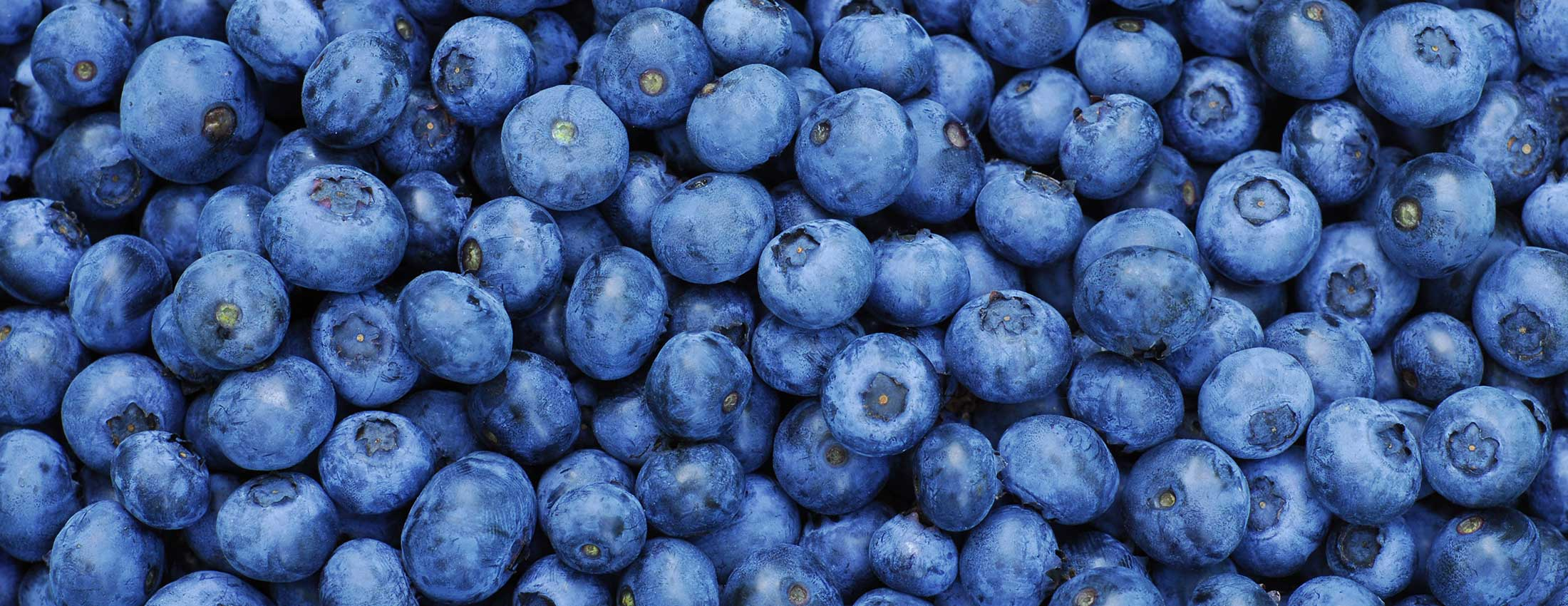 Biological Blueberries are World Beaters