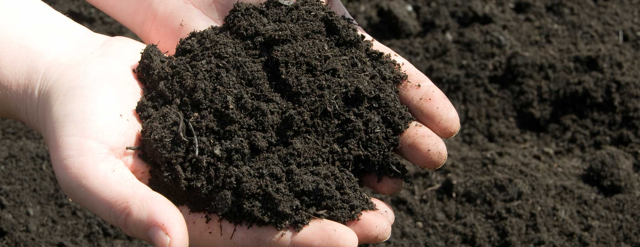 7 Reasons To  Purchase a Soil pH Meter