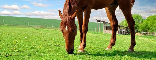 Humates for Horse Health