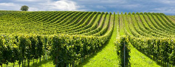 World's Leading Vineyard Uses NTS