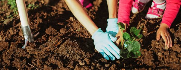 Humus Gardening – Healthy Soils, Hardy People, Happy Planet (Part 1)